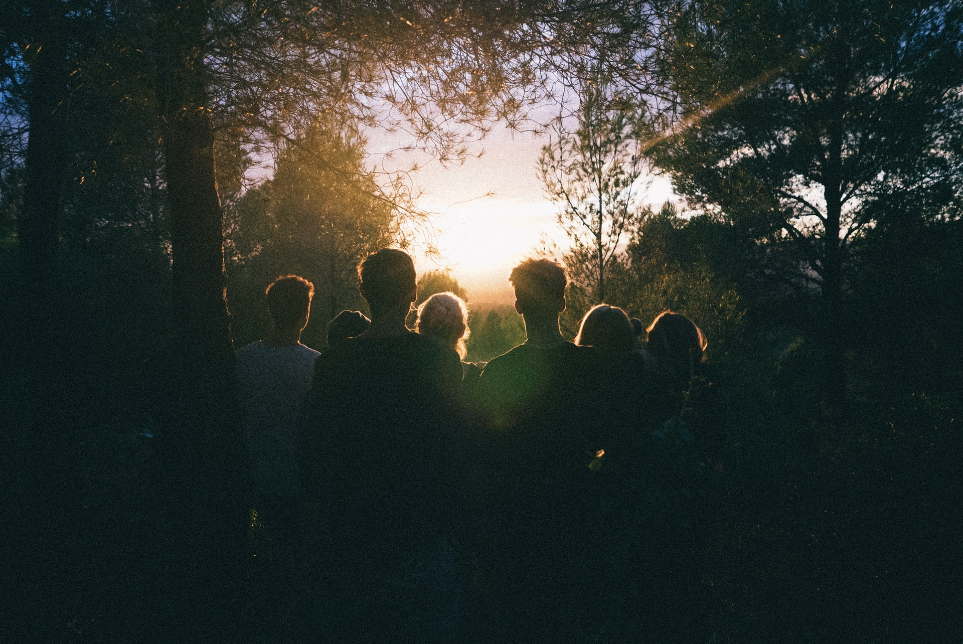 a group of people in a forest in shadows